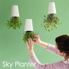 decorative indoor plants decorative indoor plant containers decorative small hanging plant