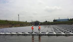 which plant was native to the new world china flips the switch on world u0027s biggest floating solar farm