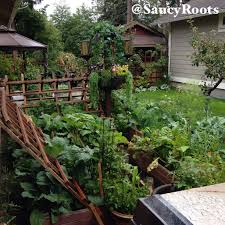 garden center beauties permaculture june 17th 2016 u2013 saucy roots