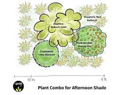 plant combo for afternoon shade from egardengo cryptomeria