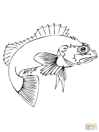 ocean perch coloring page free printable coloring pages