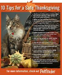 shareable graphic 10 tips for a safe thanksgiving petfinder