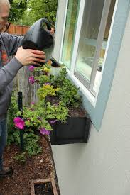 Small Window Box Flowers Step By Step Guide To Planting A Window Box