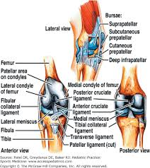 Lateral Patellar Ligament Chapter 26 Acute Injuries Of The Knee Pediatric Practice