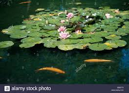 plants flower water in pond flowering in bloom with