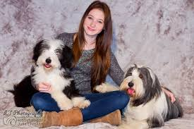 bearded collie mdr1 phoenanias bearded collies