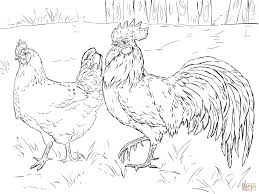 hen and rooster coloring page free printable coloring pages