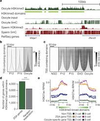 broad histone h3k4me3 domains in mouse oocytes modulate maternal