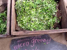 Countertop Herb Garden by Herbi Smart Hydroponic Garden Inhabitat Green Design