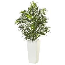 areca palm in white square planter nearly natural