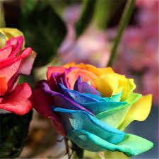flower deals rainbow flower seeds rama deals