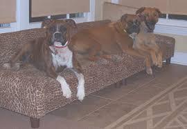 max comfort has custom dog beds dog beds dog furniture pet beds