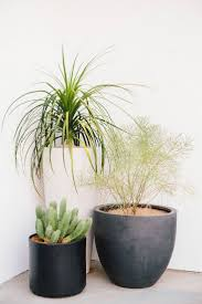 best indoor house plant indoor house plants for home decor how to arrange in living room