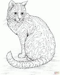 cat coloring pages hard printable coloring sheets
