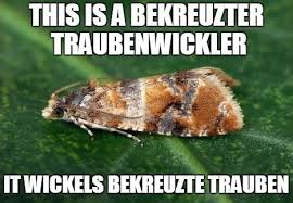 Moth Meme - flammenwerfer meme tumblr