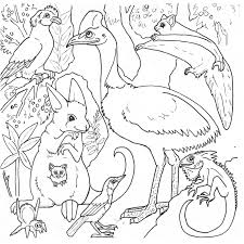 rainforest animal coloring pages printable coloring pages for