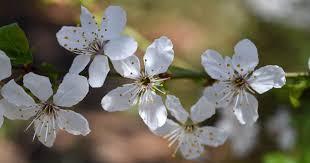 photos spring at the arboretum
