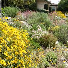25 native plants for the plants for slopes inland valley garden planner