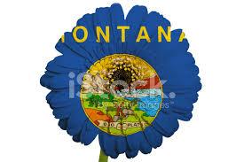 gerbera colors gerbera flower in colors national flag of montana stock