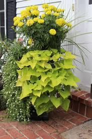 204 best trailing cascading spiller plants for baskets or