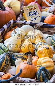 ornamental gourds stock photos ornamental gourds stock images