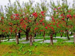 the meaning and symbolism of the word apple tree