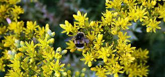 plants native to scotland british wild flower plants home