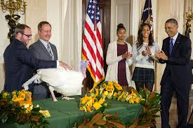 when is thanksgiving celebrated in the us president obama pardons a thanksgiving turkey whitehouse gov