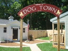dog barn the yellow dog s barn llc barrington new hshire boarding