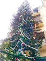 india u0027s tallest natural x u0027mas tree is in worli news