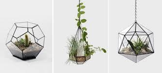 plante de chambre un terrarium de plantes design pour votre maison frenchimmo