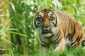 wild animals images Half the world 39 s wild animals have disappeared in 40 years daily jpg