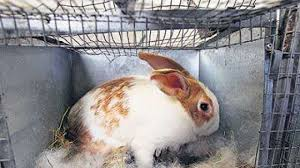 what should i feed my rabbit