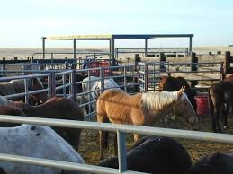bureau de change madeleine petition free government held horses to madeleine pickens