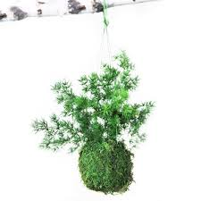 Fern Decor by Care Free Real Preserved Pine Fern Kokedama Hanging Moss