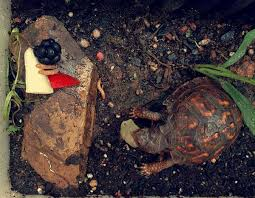 gardens and turtles creating an outdoor turtle garden or pond