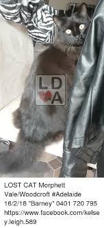 Lost Cat Meme - lost cat morphett valewoodcroft adelaide 16218 barney 0401 720 795