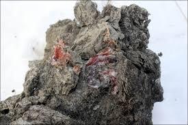 female woolly mammoth gave birth babies