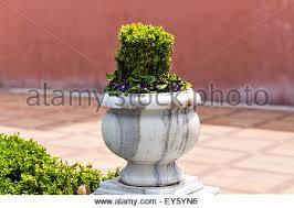 Outdoor Vase Ornamental Flower Pot Vase Garden Fairy With Aloevera Aloe Plant