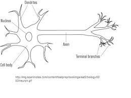 jesseca u0027s anatomy blog basic nervous system worksheet