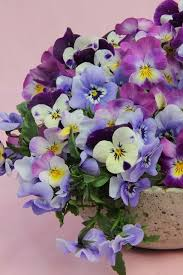 Very Pretty Flowers - 749 best baskets and flowers images on pinterest flowers spring