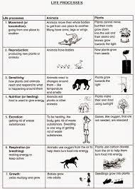 warren sparrow life processes worksheet