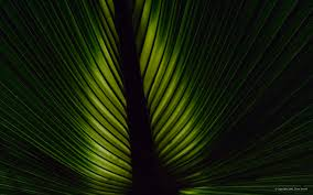 images of 16 overlapping palm fronds sc