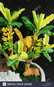 mini banana tree amazing banana tree make from clay to decor for house handmade