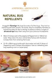 best 25 earwig control ideas on pinterest earwigs common