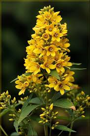 yellow flowers 164 best yellow flower garden images on beautiful