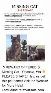 Missing Cat Meme - missing cat reward hi my name is kensington i wandered away from