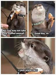 Funny Memes Animals - the 25 best animal jokes ideas on pinterest funny animal jokes