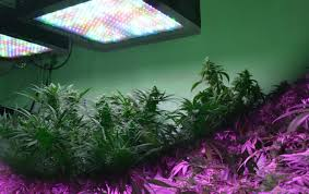 grow light bulbs lowes home lighting lowes grow lights lowes grow lights uncategorized