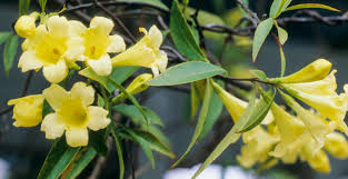 fragrant flowers try these fragrant flowers for your indoor winter garden new